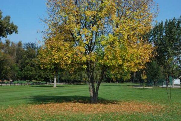 golf-klub-beograd-memorijal-knez-pavle-2010-166